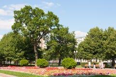 树和花在Tsvetnoy大道公园12 08 2017年 免版税库存照片