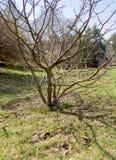 树和芽在春天反对天空 库存照片