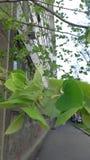 树和芽 库存图片