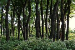 树和茂盛植物小灌木林  免版税库存图片