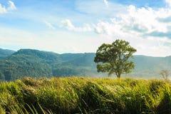 树和草原phu-lom-lo山的, Loei,泰国 免版税库存图片