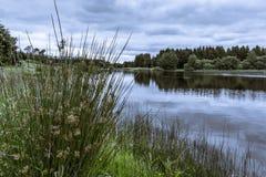 树和草反射在一个平静的湖的水中 免版税库存照片