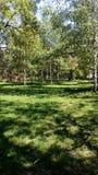 树和草在公园 库存照片