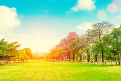 树和草地在日落与光 背景蓝色云彩调遣草绿色本质天空空白小束 v 免版税库存照片