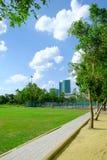树和草坪在一个明亮的夏日在公园 库存图片