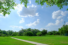 树和草坪在明亮的夏日在公园 免版税库存图片