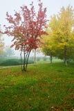 树和草坪红色叶子雾的 免版税库存图片