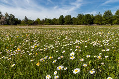 树和草坪 免版税图库摄影
