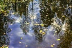 树和蓝天的反射在森林湖的水中 免版税库存照片