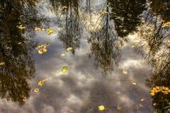 树和蓝天的反射在森林湖的水中 免版税库存图片