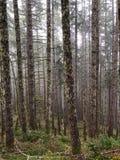 树和蕨森林  免版税库存照片