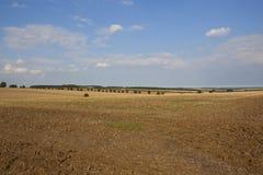 树和被收获的领域行  免版税库存图片