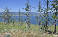 树和贝加尔湖看法在海岛上 库存图片
