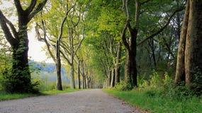 树和路在夏天和秋天期间 免版税库存照片