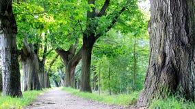 树和路在夏天和秋天期间 图库摄影
