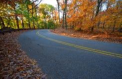 树和路在早黄色阳光下,在秋天 库存图片