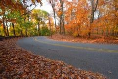 树和路在早黄色阳光下,在秋天 免版税库存照片