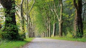 树和路 库存照片
