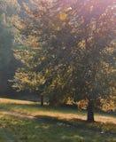 树和道路 免版税库存照片