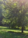 树和道路 库存图片