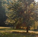 树和道路 免版税库存图片