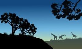 树和长颈鹿剪影  免版税库存照片