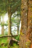 树和阳光早晨 库存图片
