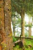 树和阳光早晨 免版税库存图片