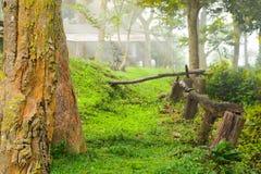 树和阳光早晨 免版税库存照片