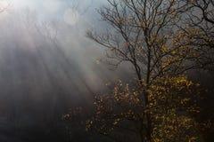 树和阳光 库存照片