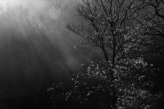 树和阳光 免版税库存照片