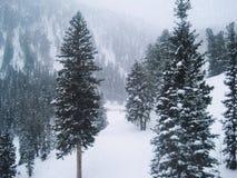 树和雪在山在圣诞节期间 库存图片