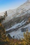树和雪山 免版税库存照片