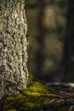 树和青苔 免版税图库摄影