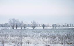 树和领域在一个冬日,一个冷的风景 免版税图库摄影