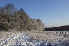 树和领域在冬天 免版税库存照片