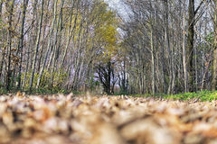 树和领域在秋天 库存照片