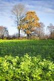 树和领域在秋天 免版税库存图片