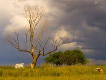树和风暴 免版税库存照片
