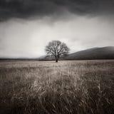 树和风暴 库存图片