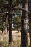 树和高草 库存图片