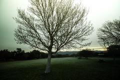 树和绿叶在一个公园在红色岩石附近 库存照片