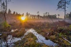 树和水坑看法在日落的有雾的沼泽 免版税库存照片