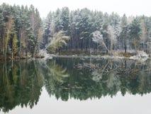 树和他们的反射在湖的水中 免版税图库摄影