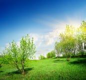 年轻树和绿色草坪 免版税图库摄影