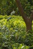树和绿色醉汉 免版税库存图片