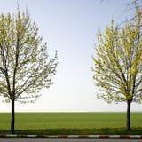 树和绿色领域 图库摄影