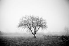 树哀伤的雾 免版税库存图片