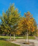 树在一个公园在秋天 库存图片