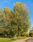 树在一个公园在秋天 图库摄影